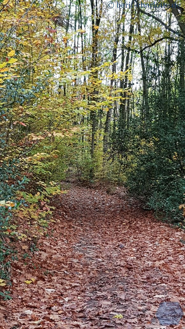 Aber wir genießen den herbstlichen Wald mitten im Ruhrgebiet.