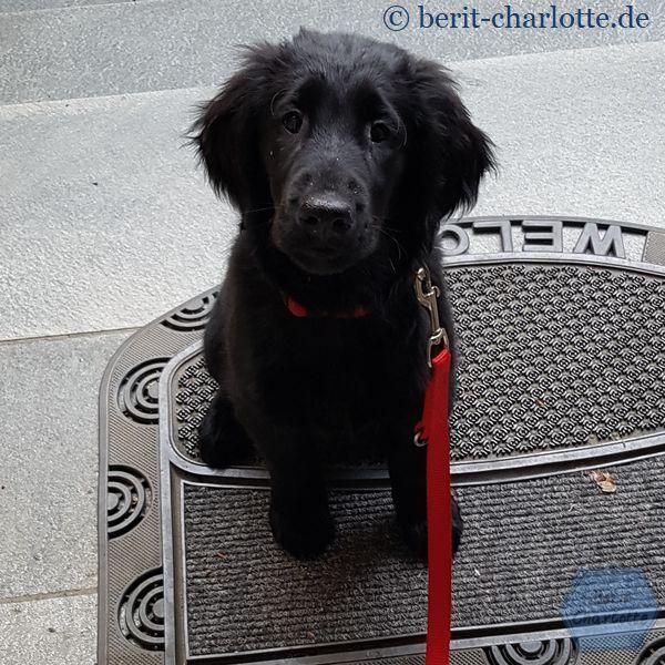 Zurück vom Spaziergang - mag der kleine Welpe hereinkommen?
