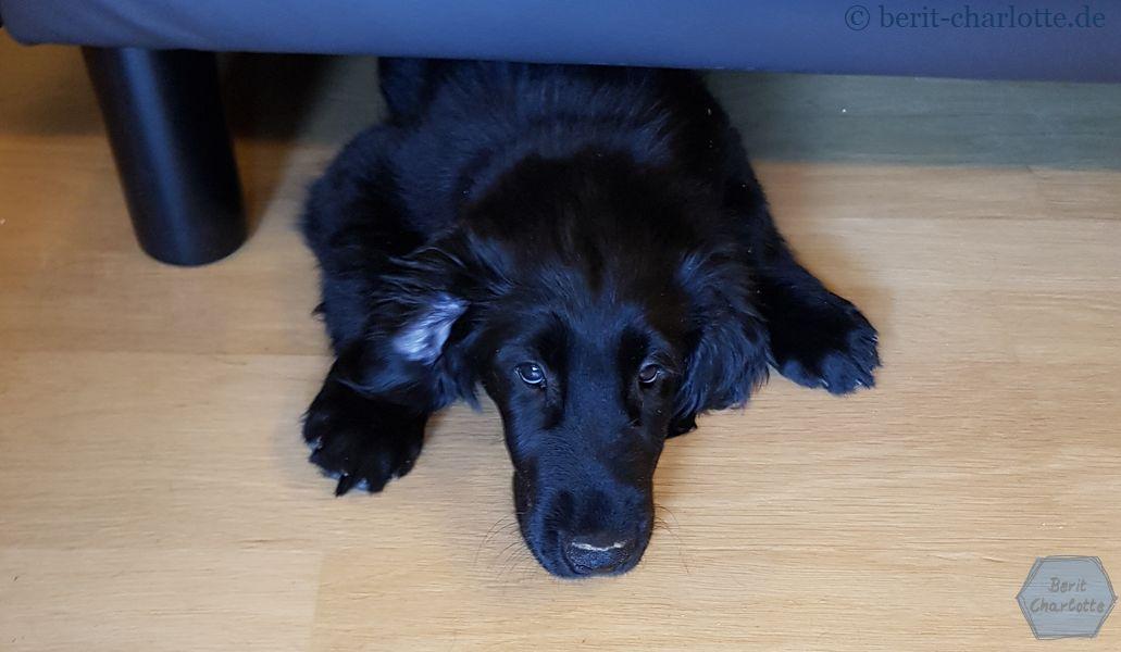 Noch passt sie unter die Couch … und schläft dort auch öfters.